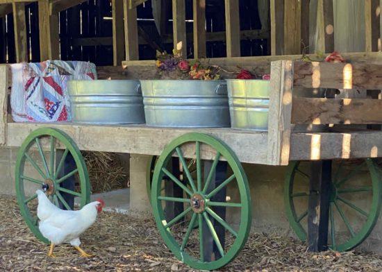 Farm wedding decorations in washtubs on a farm wagon in a barn at Sassafras SPrings